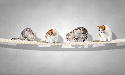 Cats on rope. Mixed media