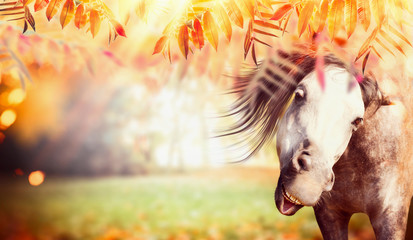 Funny gray horse face at autumn nature background with colorful fall foliage, pasture and sunbeams,...