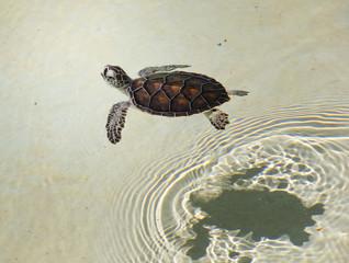 kleines Wasserschildkrötenbaby