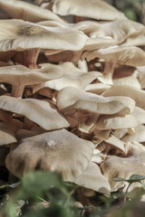 closeup of wild mushrooms at forest