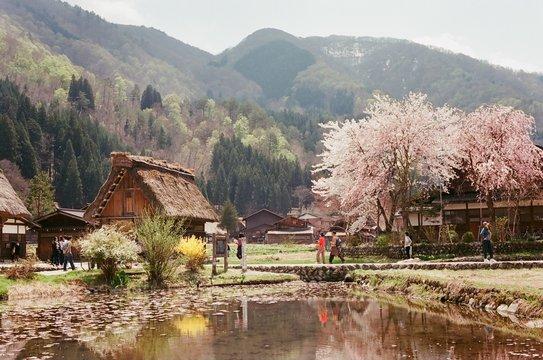 Sakura in Shirakawago