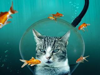 Katze mit Taucherhelm im Goldfischteich