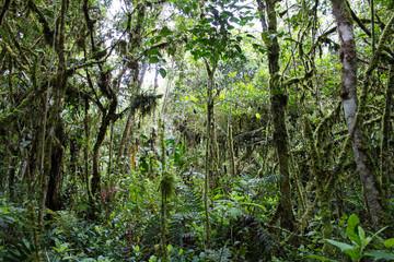 Essence of Nature Esencia de la Naturaleza