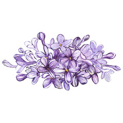 Hand drawn watercolor botanical illustration of Lilac. Element for design of invitations, movie posters, fabrics and other objects. Isolated on white.