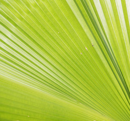 palm leaf texture pattern under the sunlight