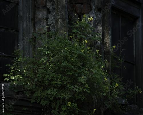 Wall mural kwiaty i stary dom