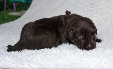 Cute puppy. pet, dog.