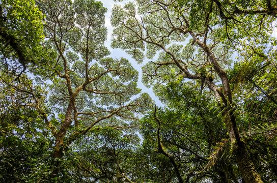 The Monteverde tree canopy
