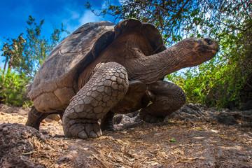 Galapagosskaя skull. Эkvador. Galapagosskie island.
