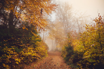 Road through a golden foggy forest