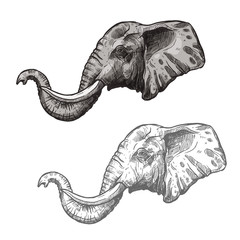 Elephant African wild animal vector sketch icon