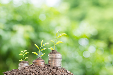 Money on the ground at background green natural. Money growing concept,Business success concept, Tree growing on pile of coins money