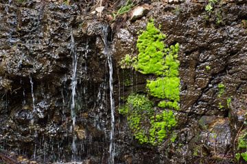 Close up of a miniature waterfall with bright lime green moss and moist vertical rocks.