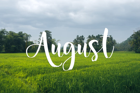 August text on tropical field and palms landscape. Nature calendar background.