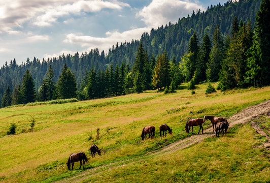 Horses by the road near the forest