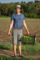 Young farmer standing on the field and holding wood box with parsley plant