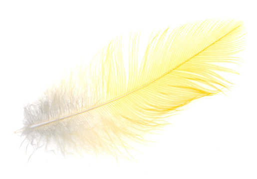 Yellow feather on a white background
