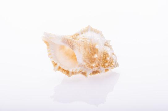 Seashell on white isolated background