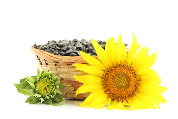Sunflower seeds in basket isolated on white
