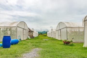 Hydroponic farm in cloudy day