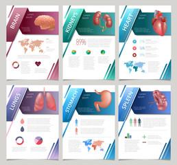 Internal human organs infographic spleen