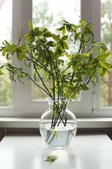 Branch of bird cherry in a vase.