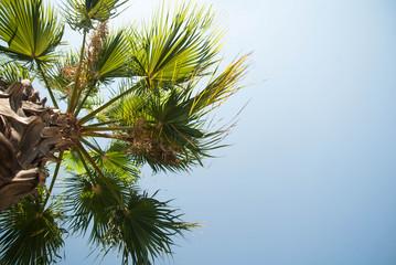 Summer palms sky rest on the sea