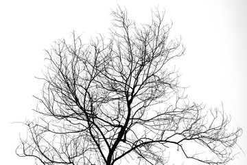 Silhouette Of Trees Branches Without Leaves
