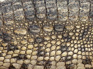 Printed roller blinds Tiger Crocodile skin texture