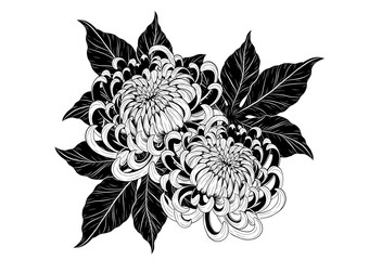 Chrysanthemum vector on white background.Chrysanthemum flower by hand drawing.Chrysanthemum vector on white background.Floral tattoo highly detailed in line art style.