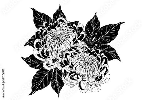 Line Art Flower Design : Chrysanthemum vector on white background rysanthemum flower by