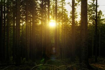 Keuken foto achterwand Bos in mist Sonnenuntergang in den Wäldern