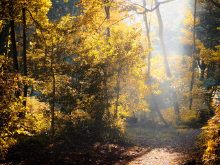 sun shining though a clearing in autumn forest with mist and bright woodland trees with fallen leaves on the ground