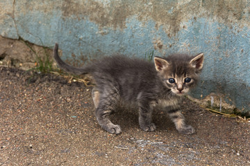 Homeless, fluffy little gray kitten with blue eyes. A lonely kitten on the wall.