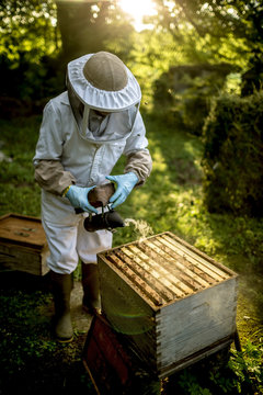 Beekeeper wearing veil holding smoker over beehive to calm honeybees before collecting honey
