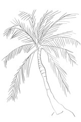 doodle of a palm tree