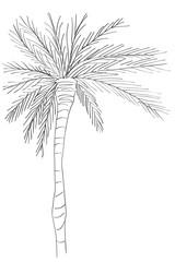 palm tree doodle