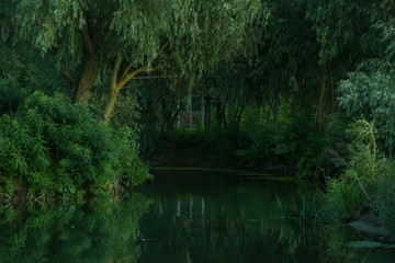 Calm quiet pond with willow trees around.