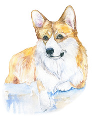 Corgi dog. Watercolor close up portrait of dog isolated on a white background. Funny dog . Hand drawn cute pet.  Greeting card design clip art illustration