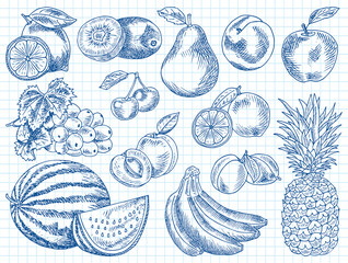 Fruits menu, summer garden, lemon, apple, grape, watermelon, pear, peach, plum, cherry, lime, kiwi, apricot, banana, pineapple