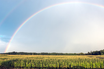 Double rainbow over the maize chain after rain