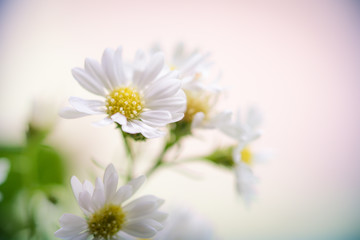 Abstract blur close up nature of flower using for background or wallpaper - Vintage lomo effect