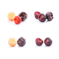 Set of isolated wild berries on white background. Ripe and green blackberry on white