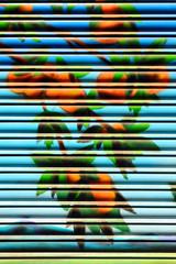 Persiana metálica de una tienda decorada con naranjas