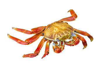 Colored Crab Isolated
