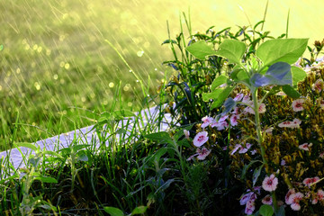 Rain Water Falling on Flowers in Garden