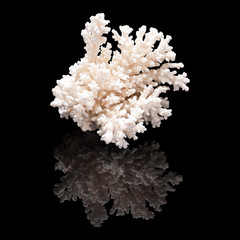 White coral on black background isolated