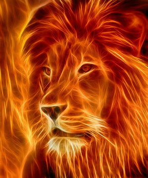 lion laser on fire