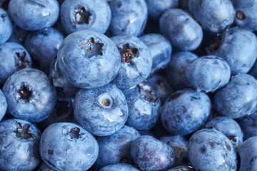 Close up picture of ripe and fresh blueberries, shallow depth of field.