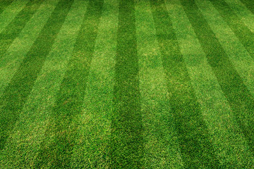 green grass line background